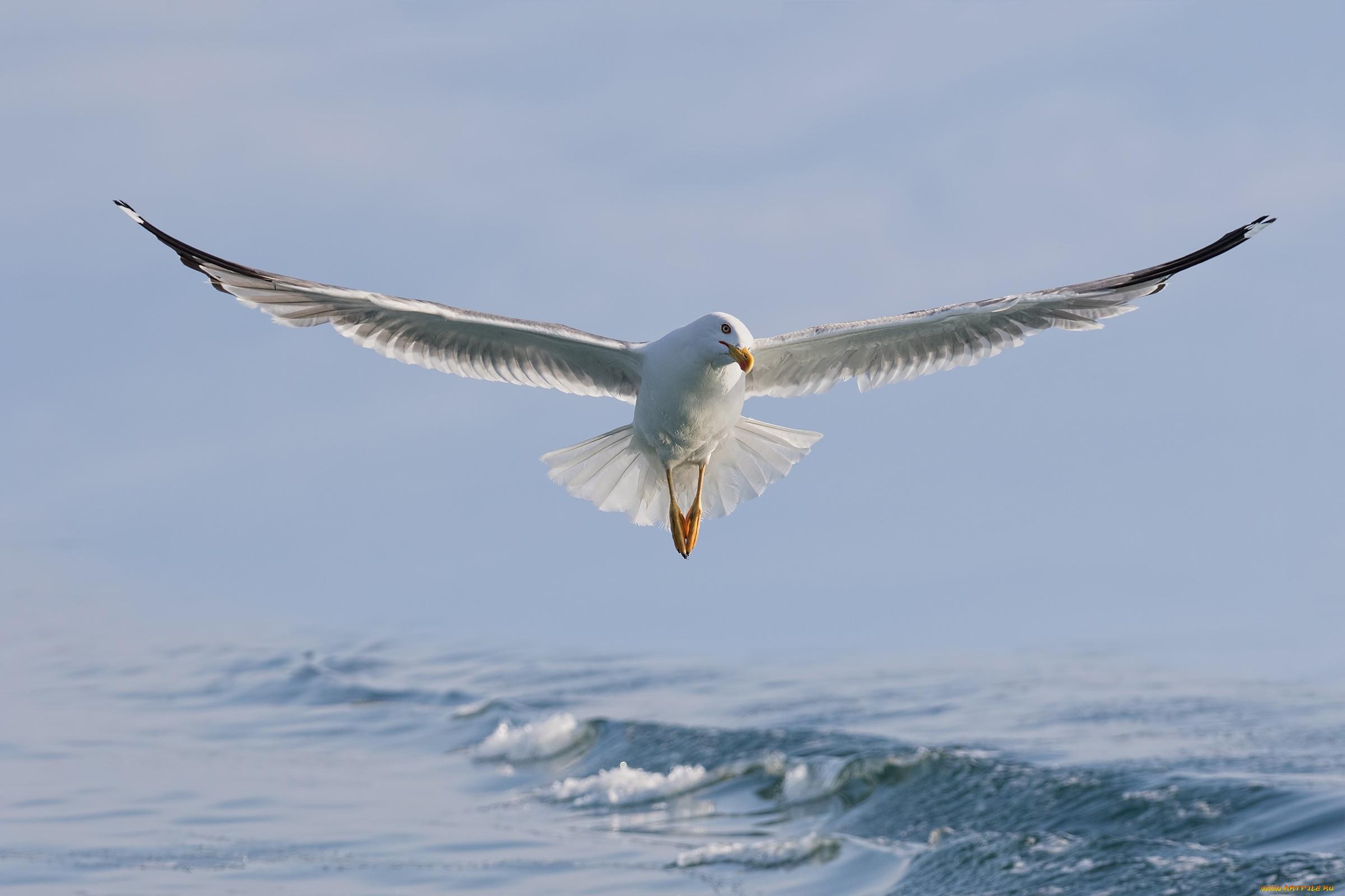 фото летящих чаек над морем ходите художественные